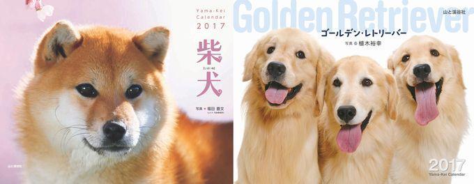 柴犬・子柴・ゴールデン・レトリーバー・・かわいいワンちゃんのヤマケイカレンダーも毎年人気