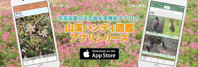 山溪ハンディ図鑑アプリ 野に咲く花